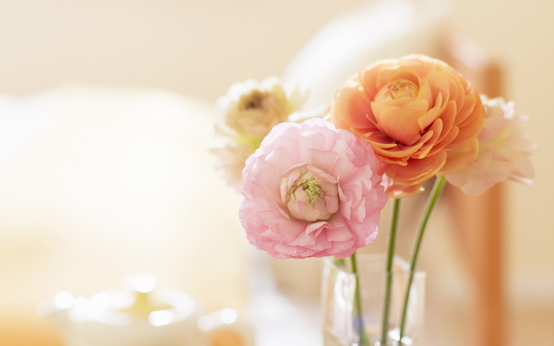 1920x1200 Pretty Ranunculus in a Vase wallpaper