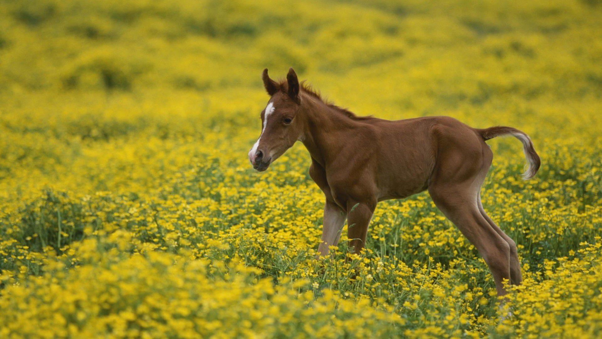 Arabian Horse Images Arabian Horse W...