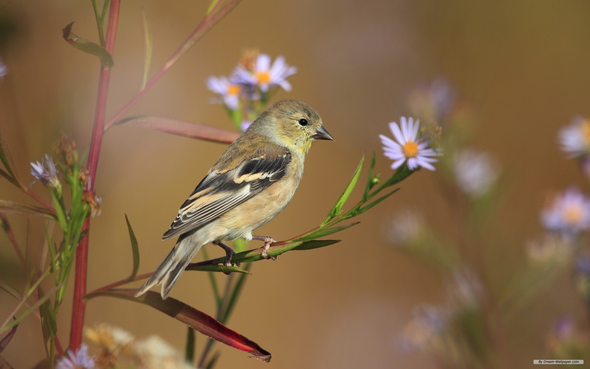 1920x1200 Free Animal wallpaper - Spring Flowers And Birds wallpaper -   wallpaper - Index 8