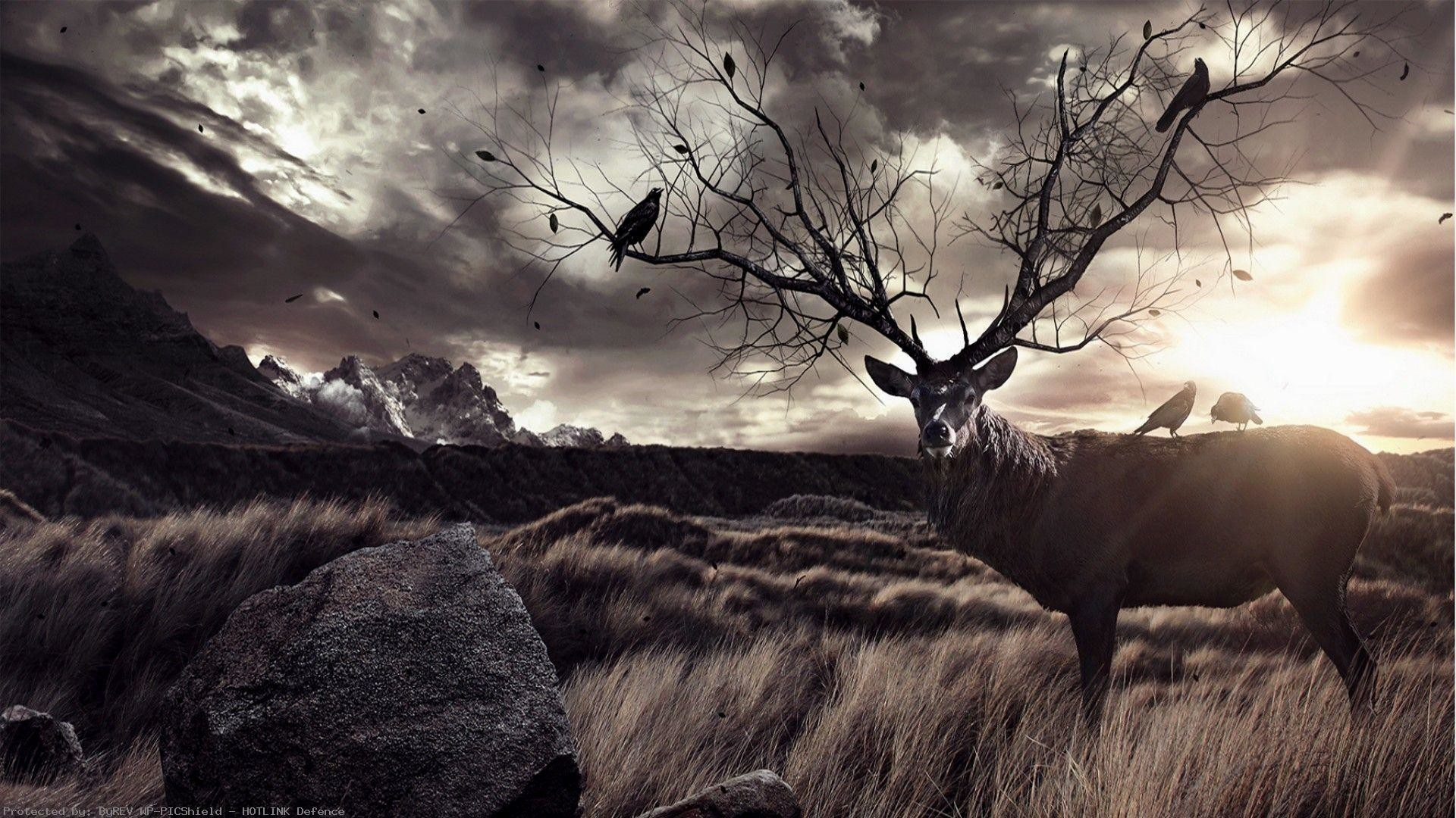 1920x1080 Free Deer Wallpaper Wp6006697