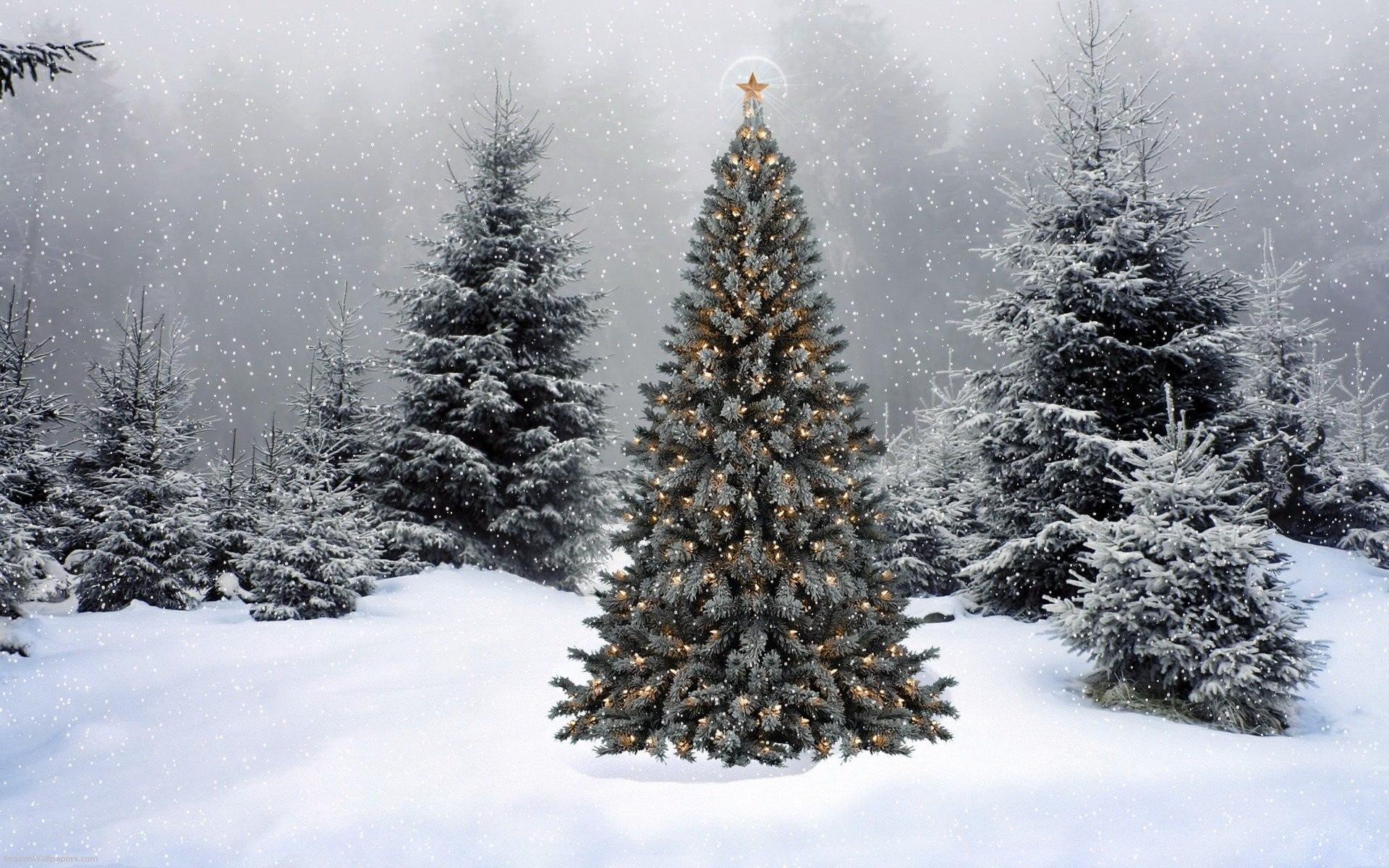 1920x1200 Christmas Tree In Snow Wallpaper