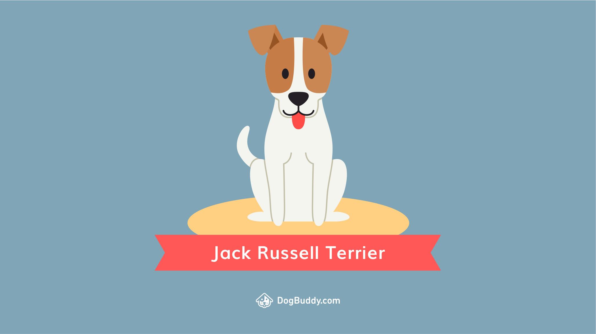 Jack Russell Terrier Wallpaper (61+ images) Jack Russell Terrier Wallpaper