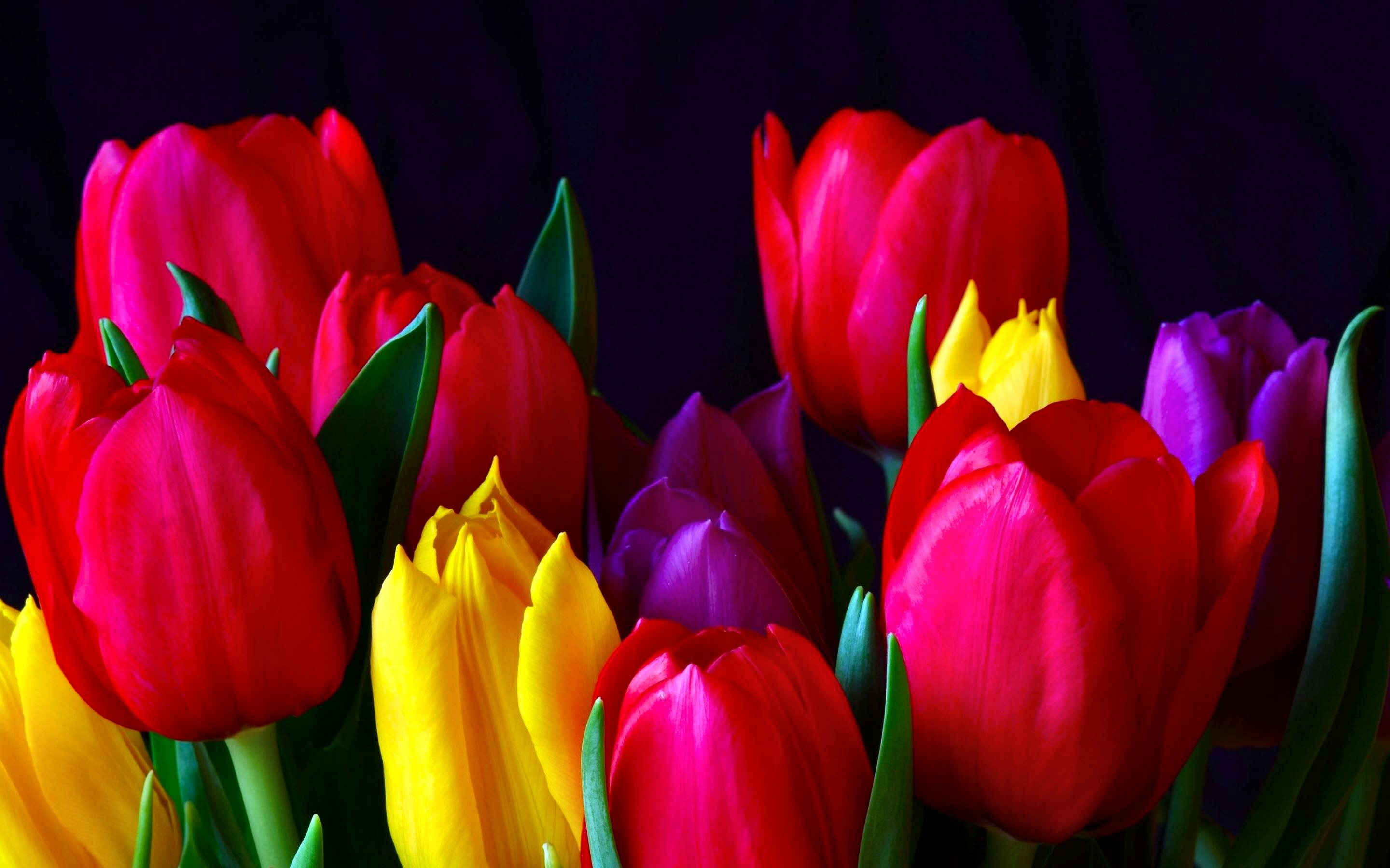 2880x1800 HD Wallpaper | Background ID:328195.  Earth Tulip