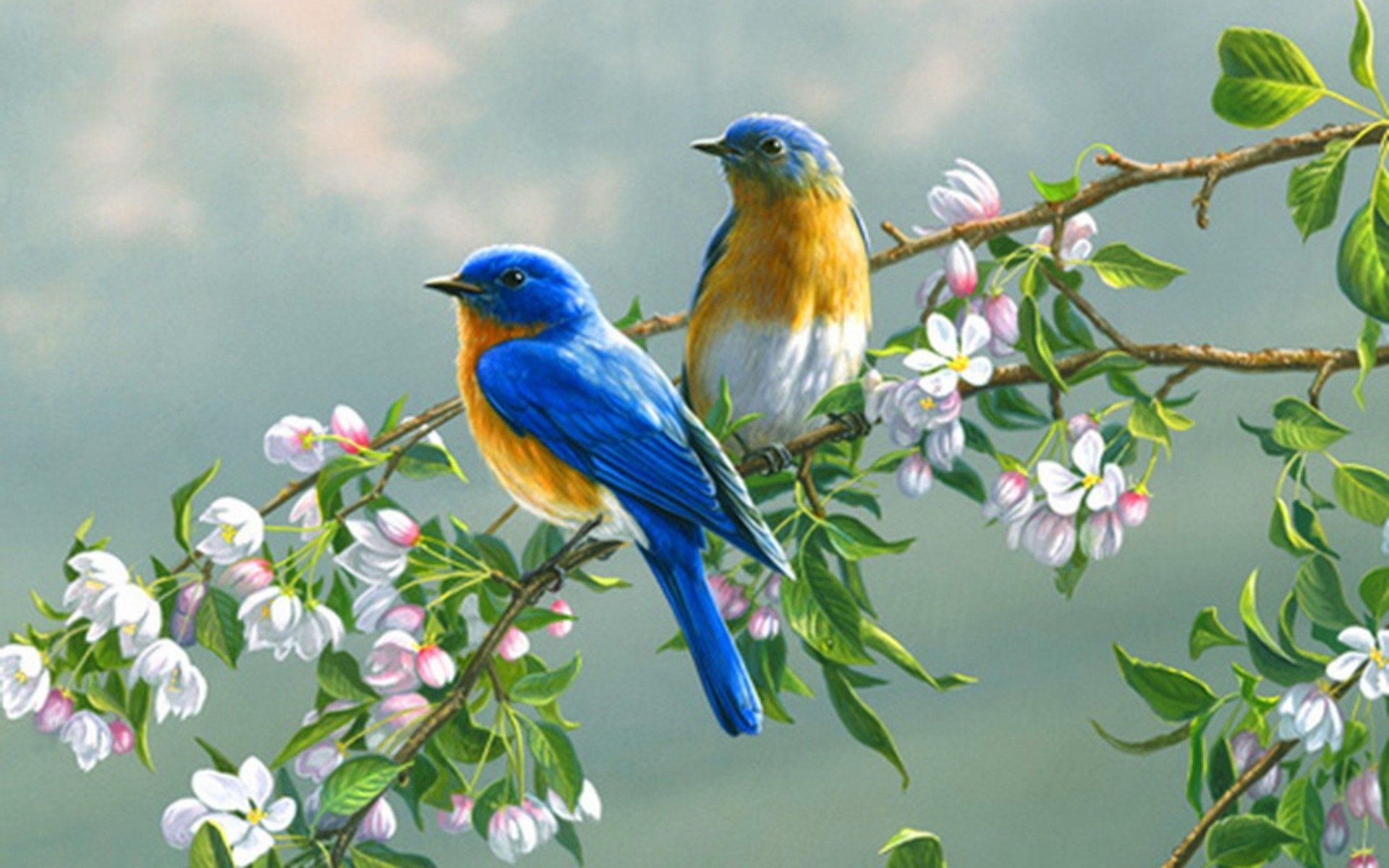 1920x1200 Spring Flowers And Birds Wallpaper ( px)