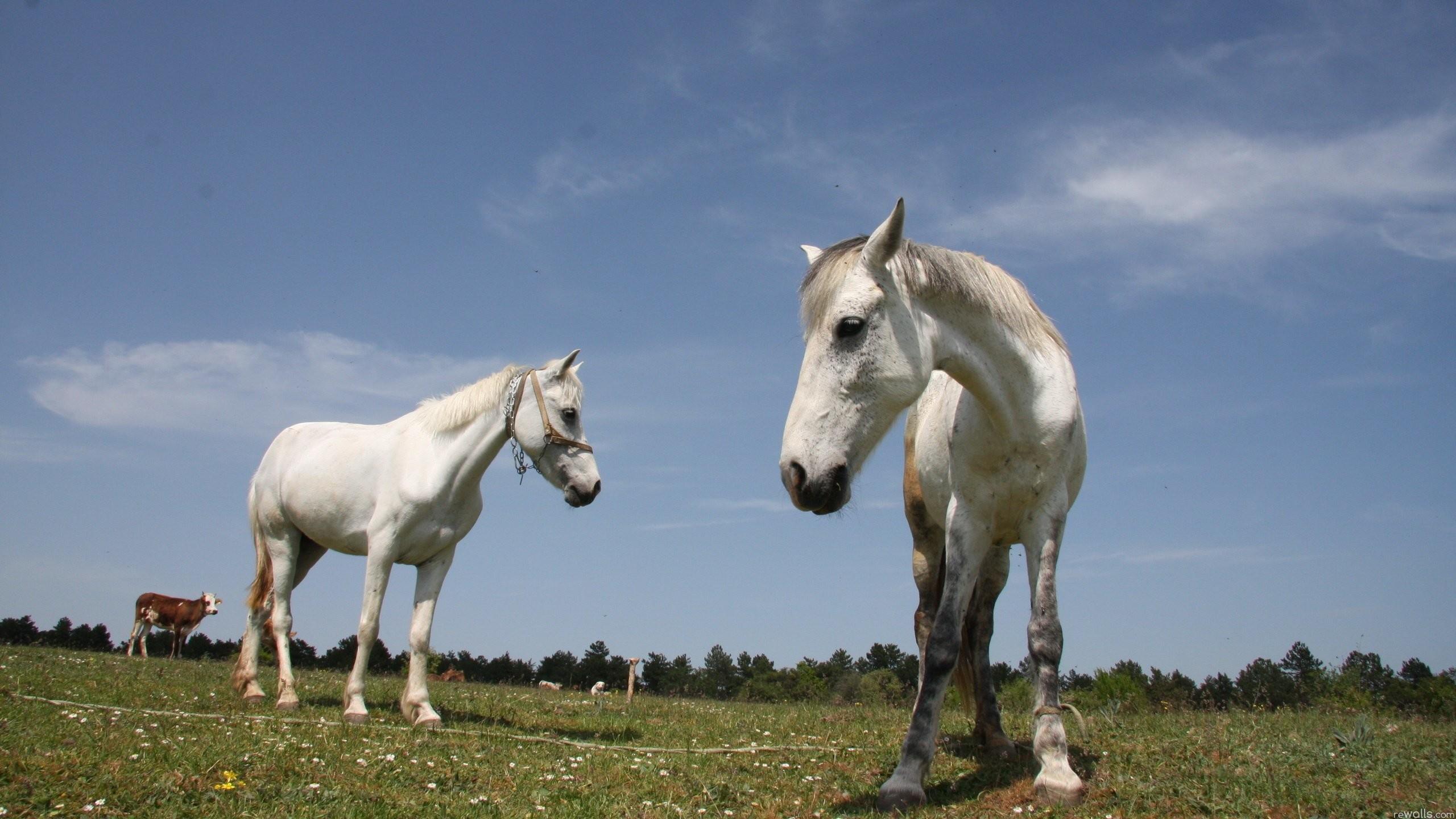 Desktop Wallpaper Horses (57+ Images