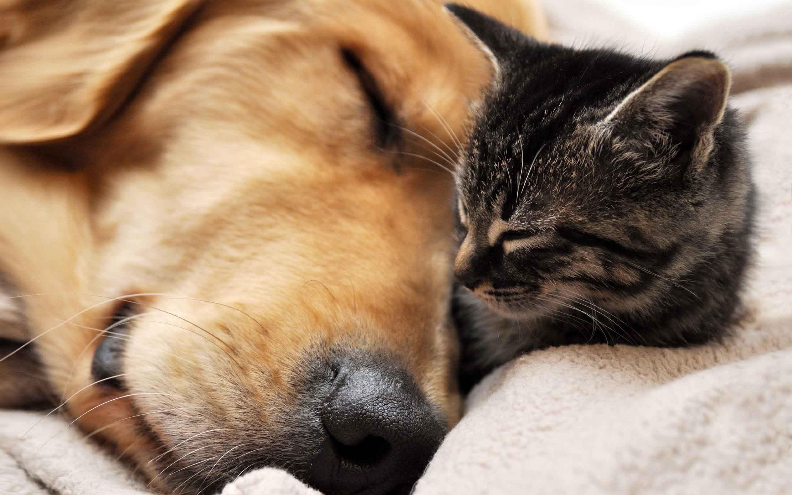 2560x1600 Cat and dog sleeping wallpapers and images - wallpapers, pictures .