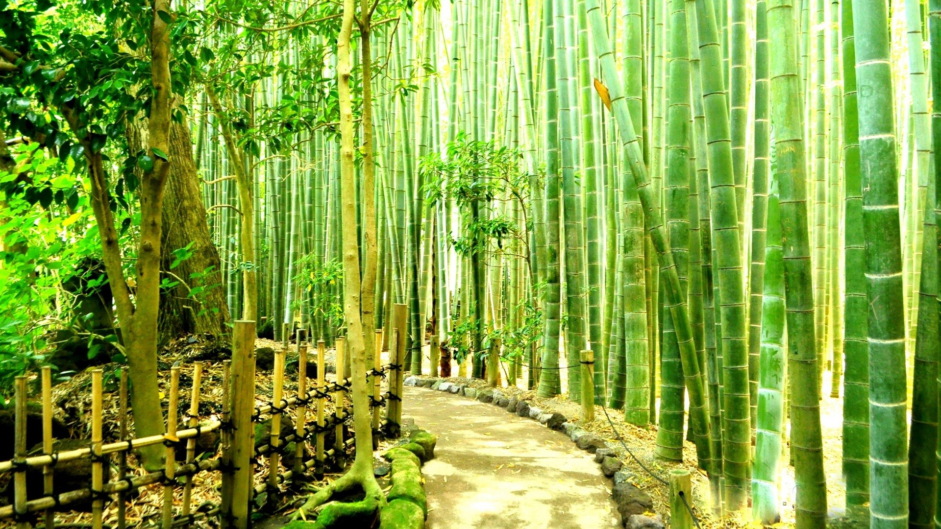 1920x1080 wallpaper.wiki-Bamboo-Forest-Wallpaper-for-Desktop-PIC-