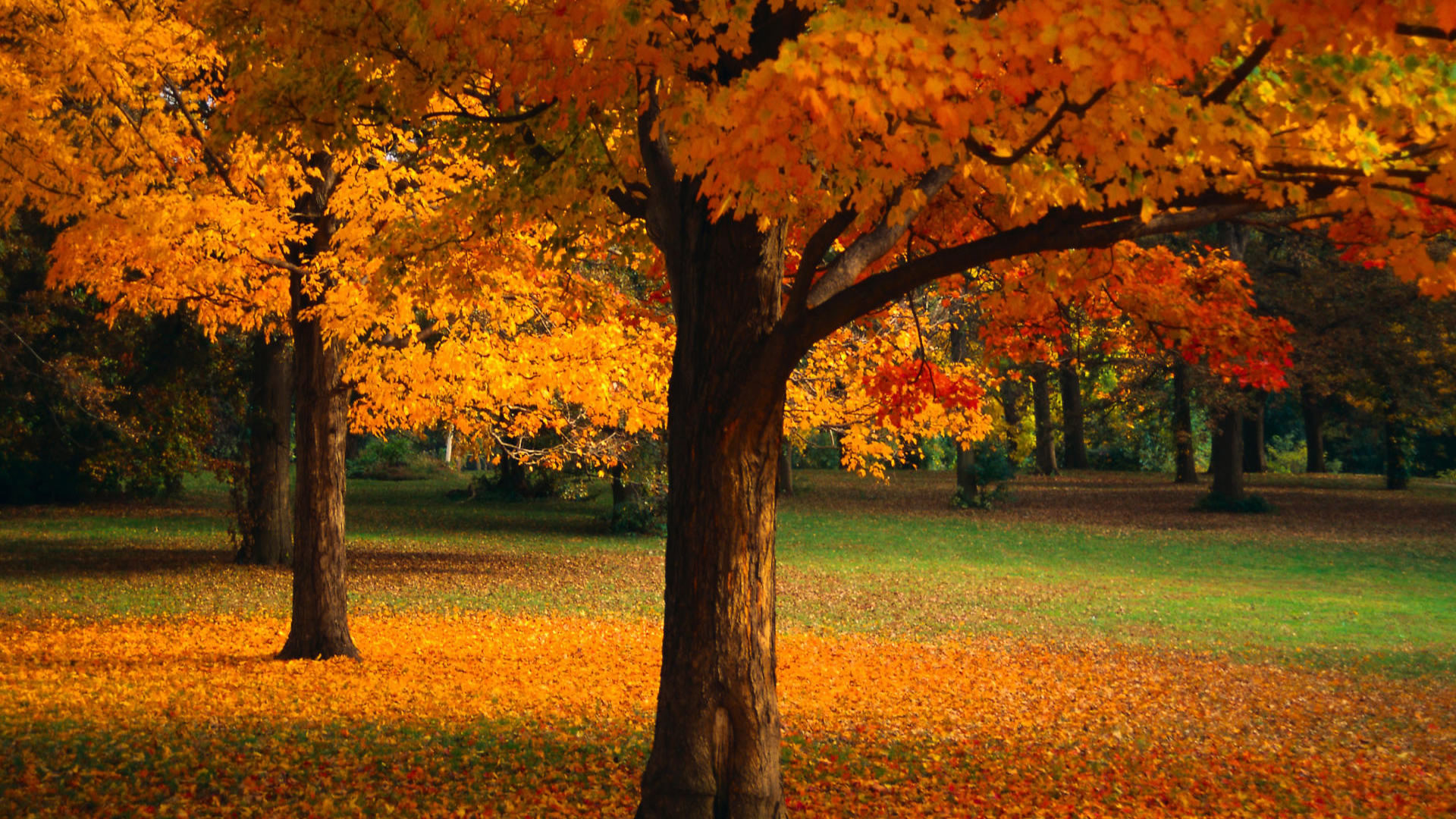 1920x1080 Beautiful Golden Trees Wallpaper  768x432