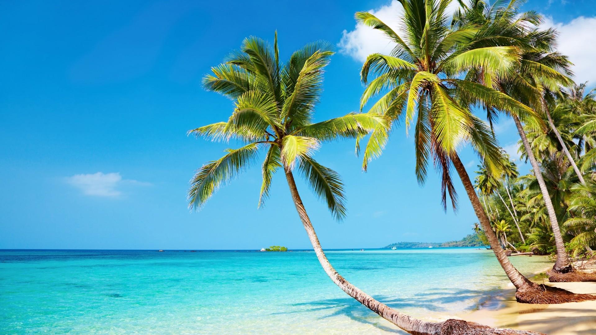 2560x1600 tropical beach hammock wallpaper tropical beach hd wallpaper  68  images   rh   getwallpapers