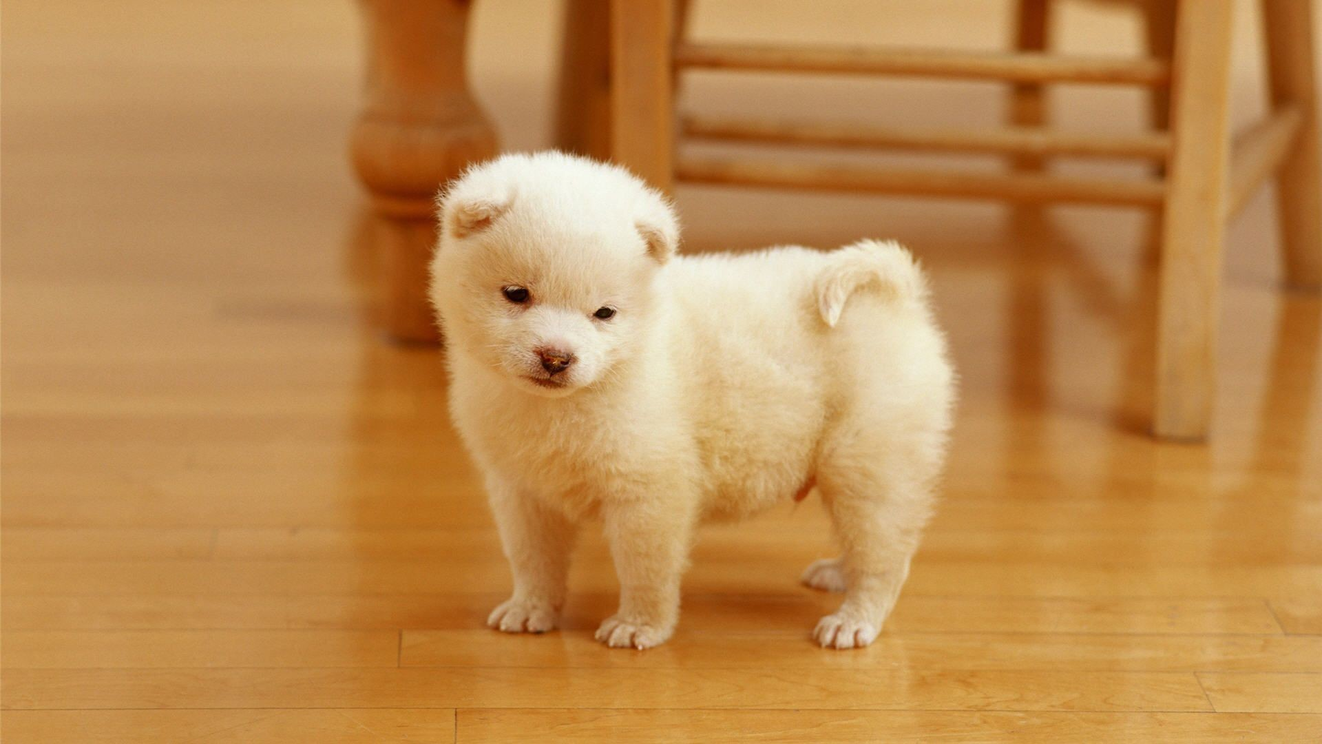 Puppy Wallpapers For Desktop 67 Images