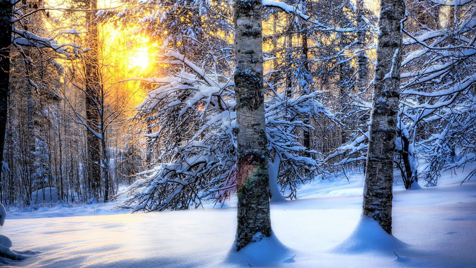 1920x1080 Winter Forest Desktop Wallpaper, Winter Forest Pictures