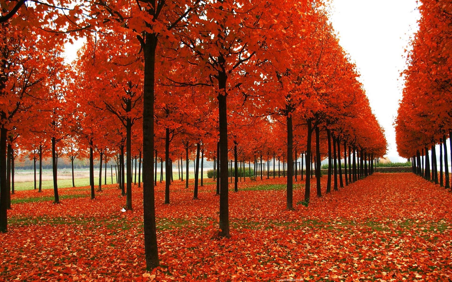 1920x1080 1920x1080 1920x1080 Seasonal Pictures for Desktop Wallpaper | Desktop Image