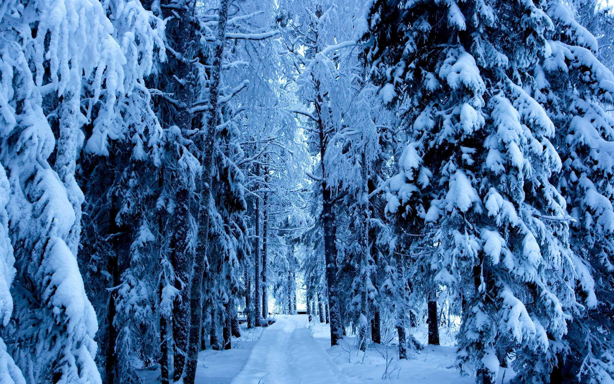 2560x1600 awesome nature winter snow trees for android wallpaper Check more at  http://www