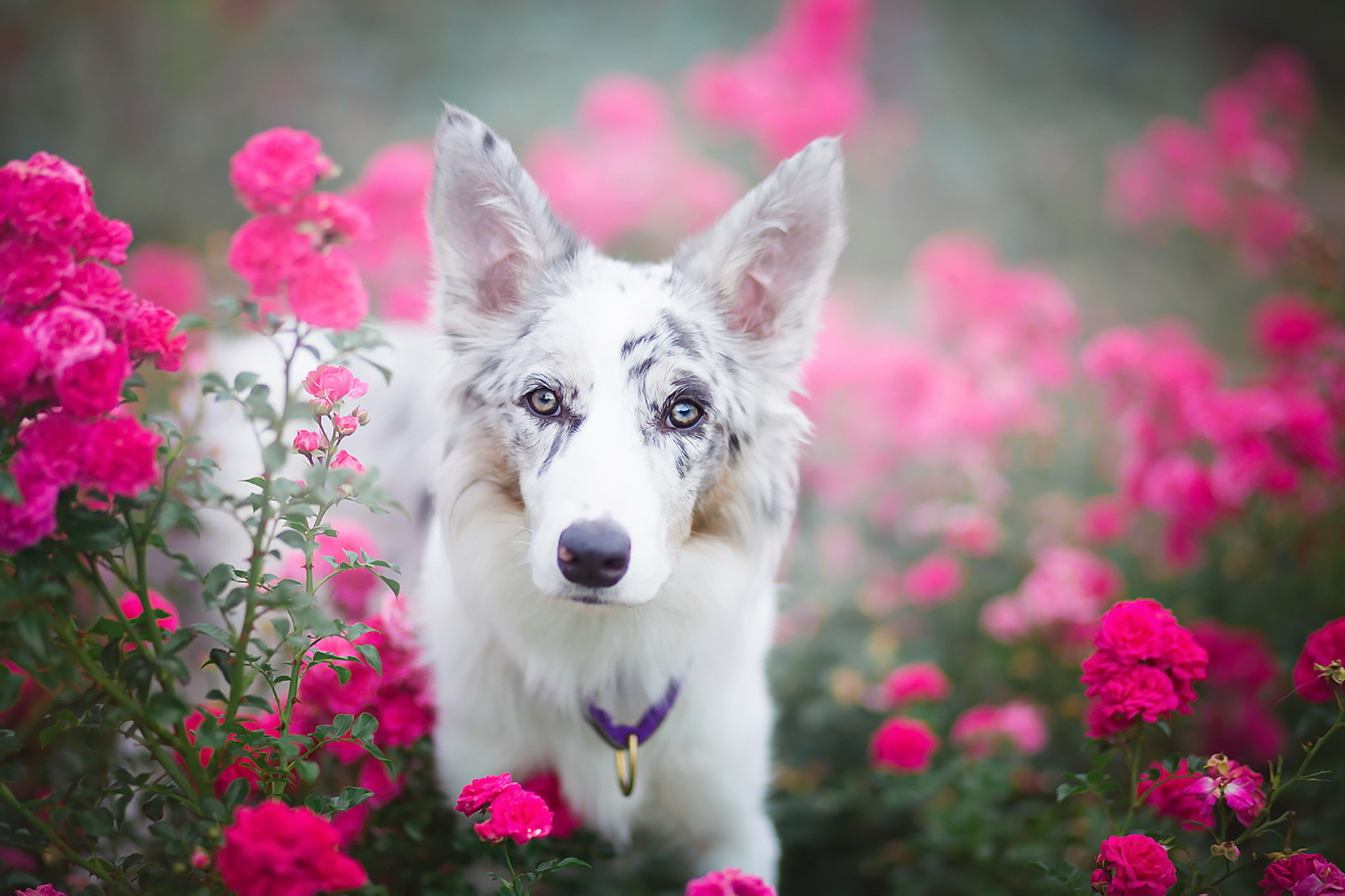 Puppies And Flowers Wallpapers (63+ Images