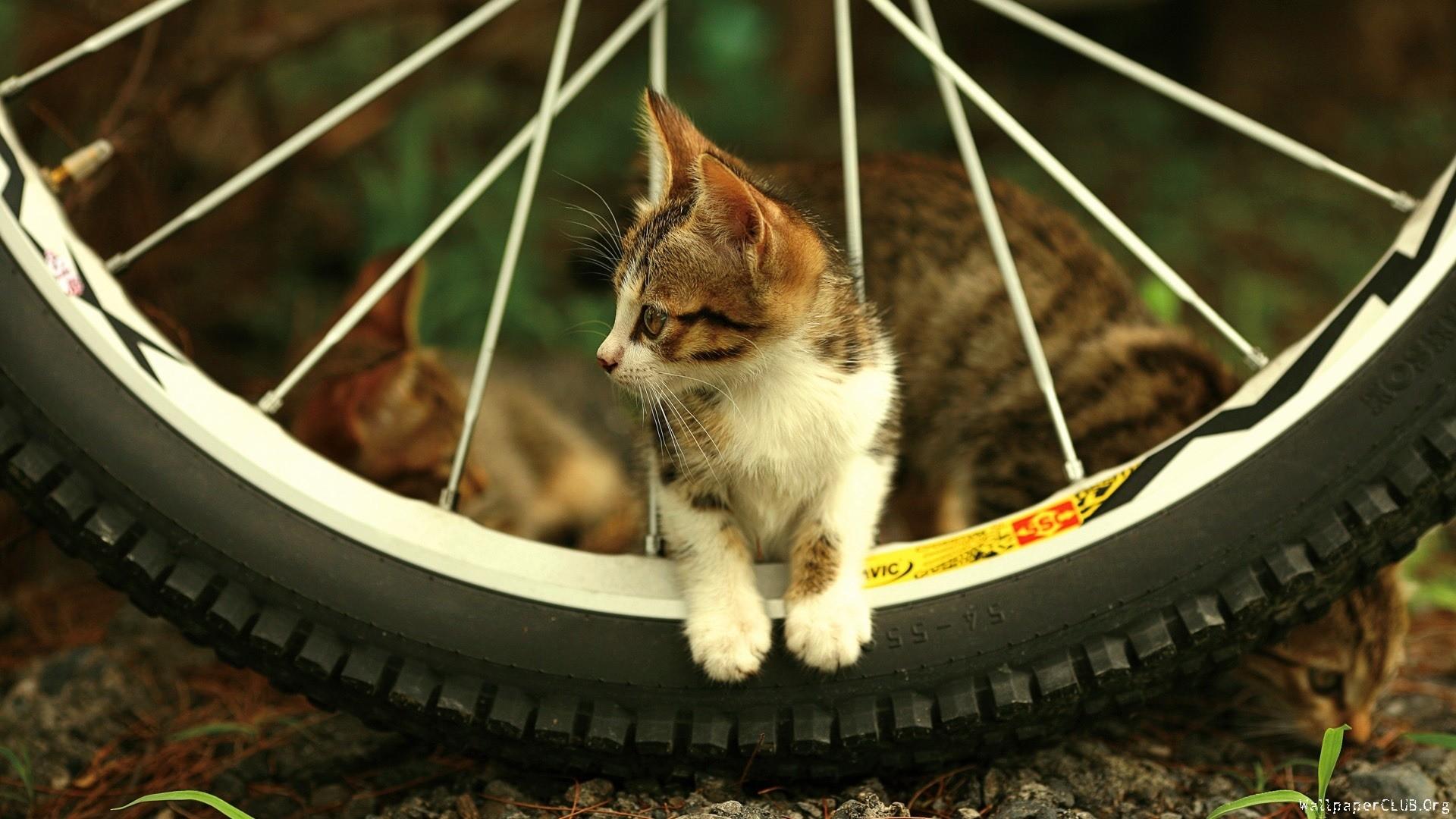 Kitty Cat Desktop Wallpaper 64 Images