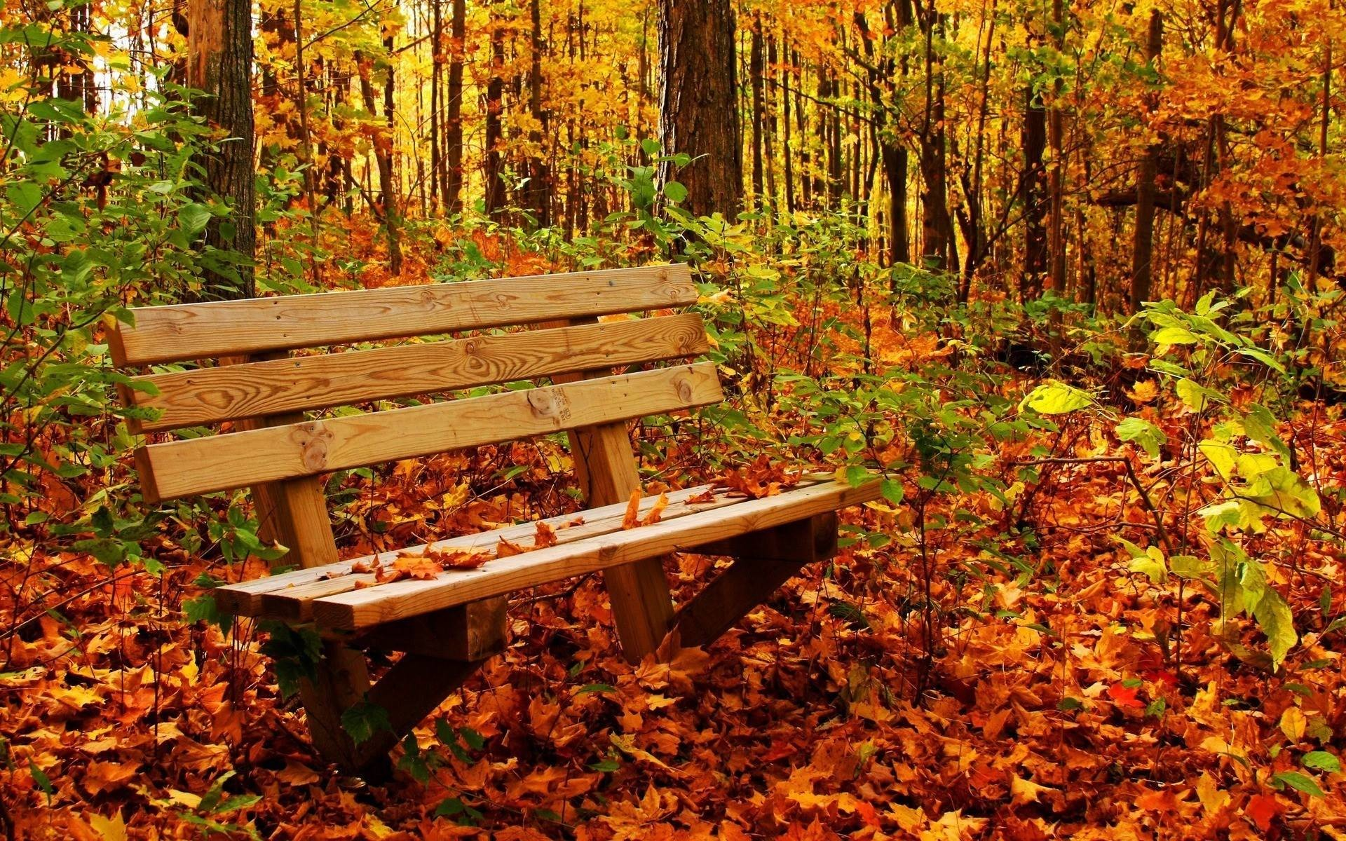 1920x1200 Desktop Wallpaper Nature Autumn Hd Pictures 4 HD Wallpapers | Eakai.