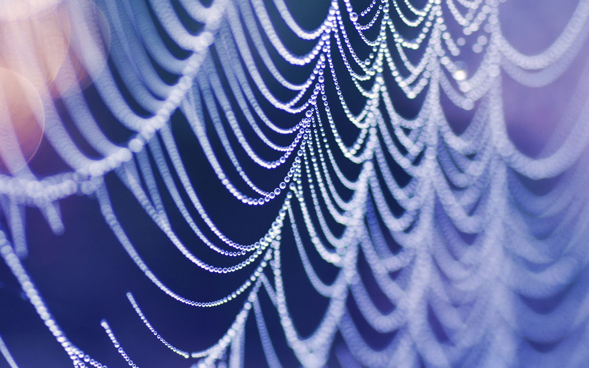 1920x1200 Photography - Spider Web Wallpaper