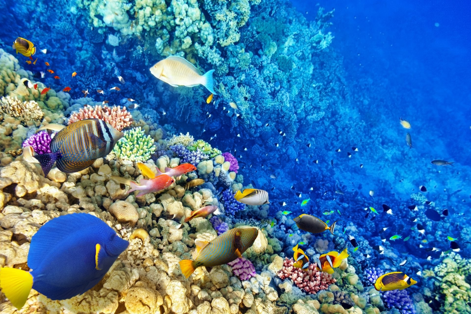 1920x1280 underwater world coral reef tropical fishes ocean underwater world fish  ocean coral reef