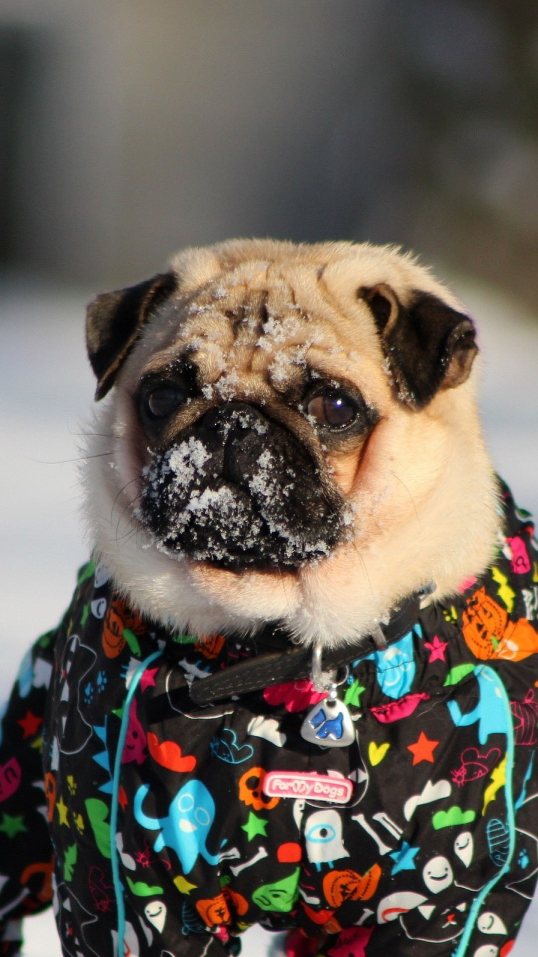 1080x1920 Winter-Pug-wallpaper-wp1008338