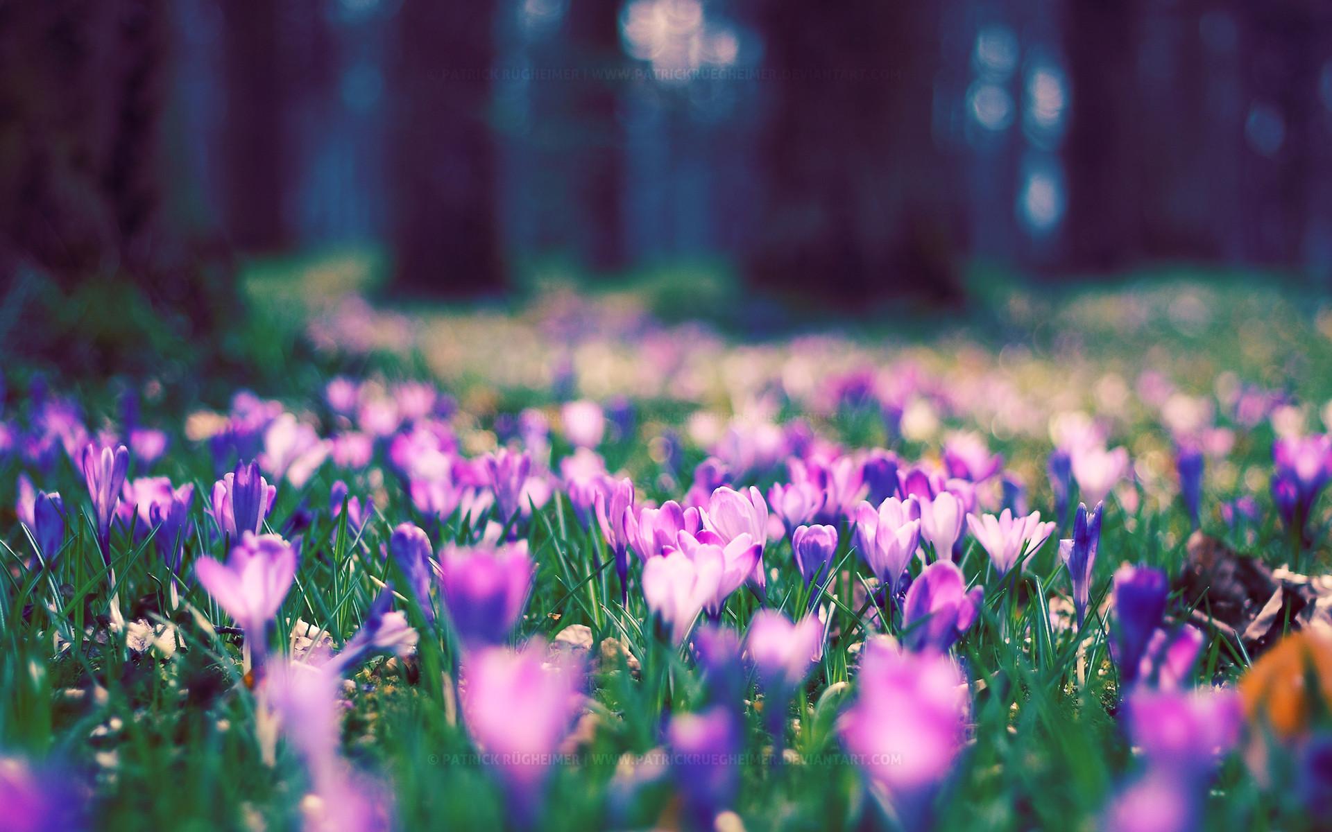 ТОП-7 самых красивых цветущих долин мира фото цветочных 47