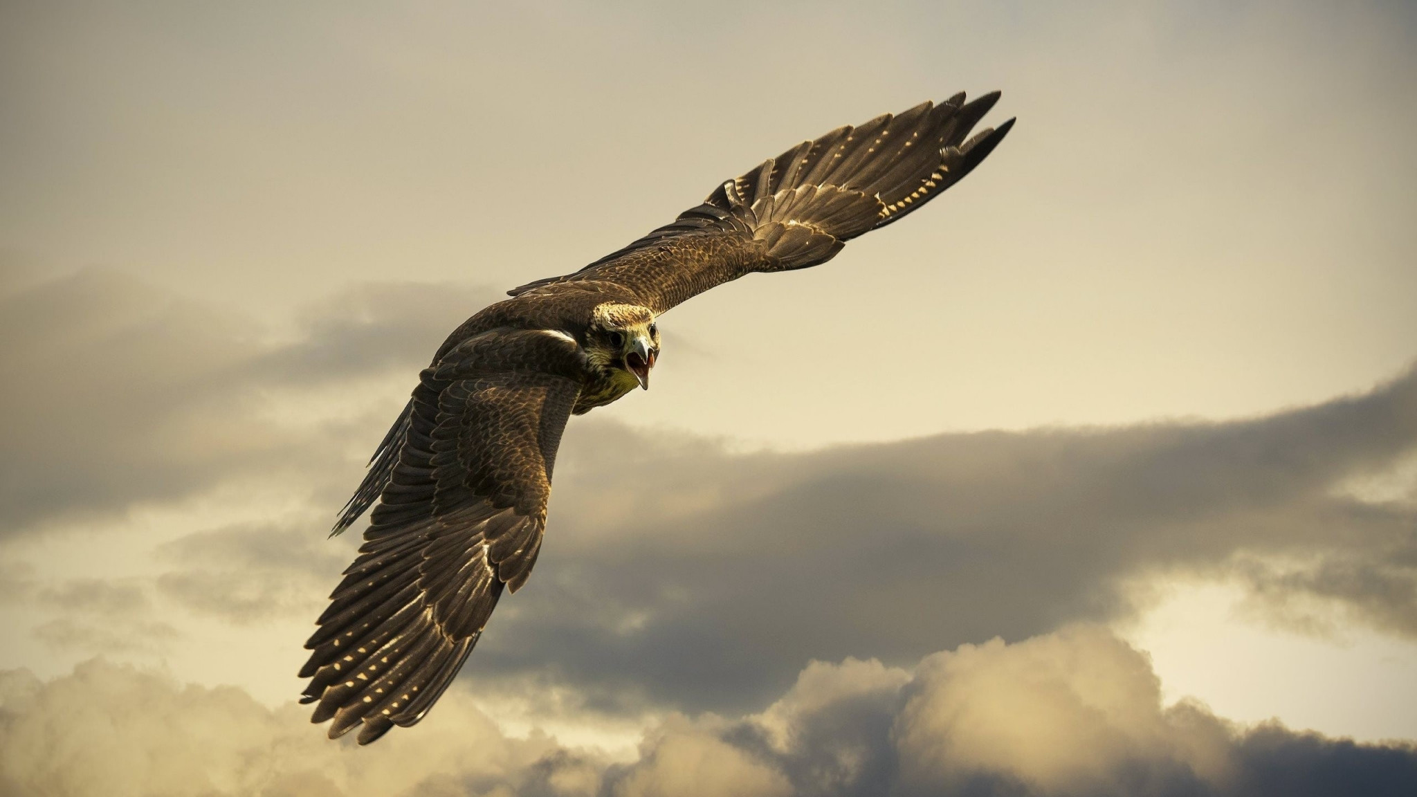 2048x1152 Preview wallpaper eagle, flight, sky, wings, clouds