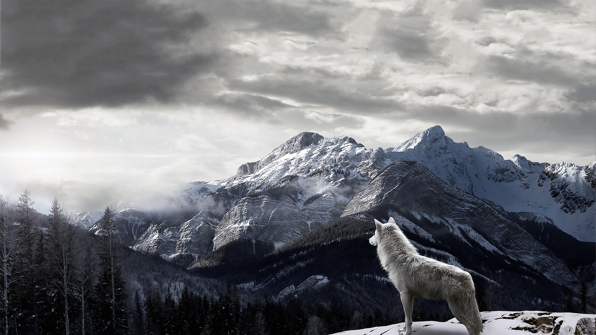 1920x1080 Animals--Full-HD-1080p-above-is-Mountains-