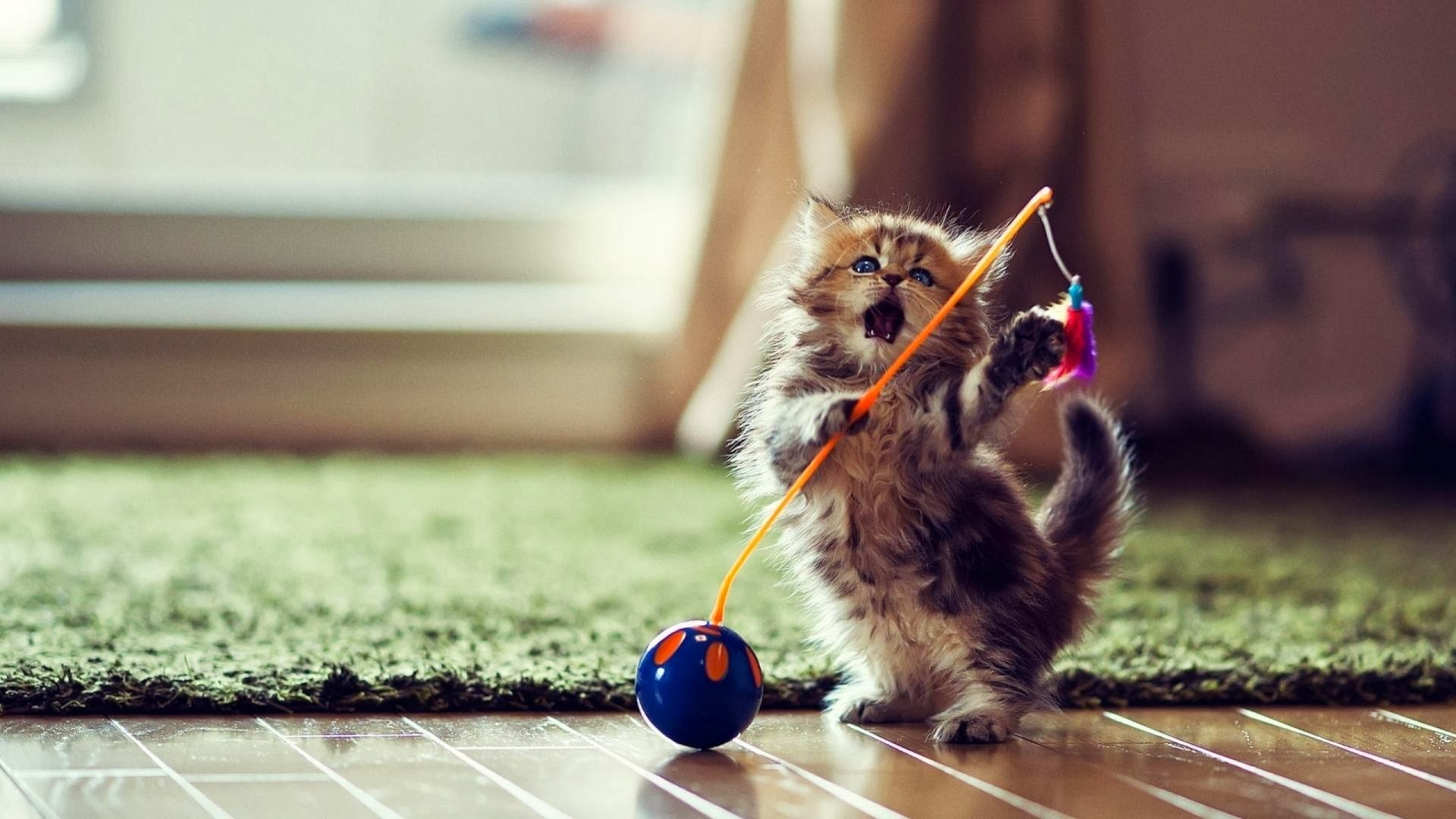 1920x1080 Funny Cute Cat Playing Wallpaper Desktop Wallpaper