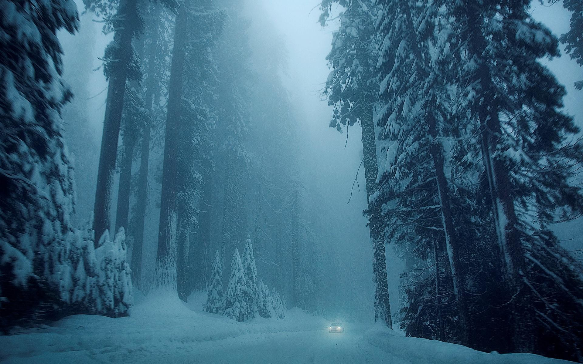 1920x1080 Winter Forest Desktop Wallpaper Pictures