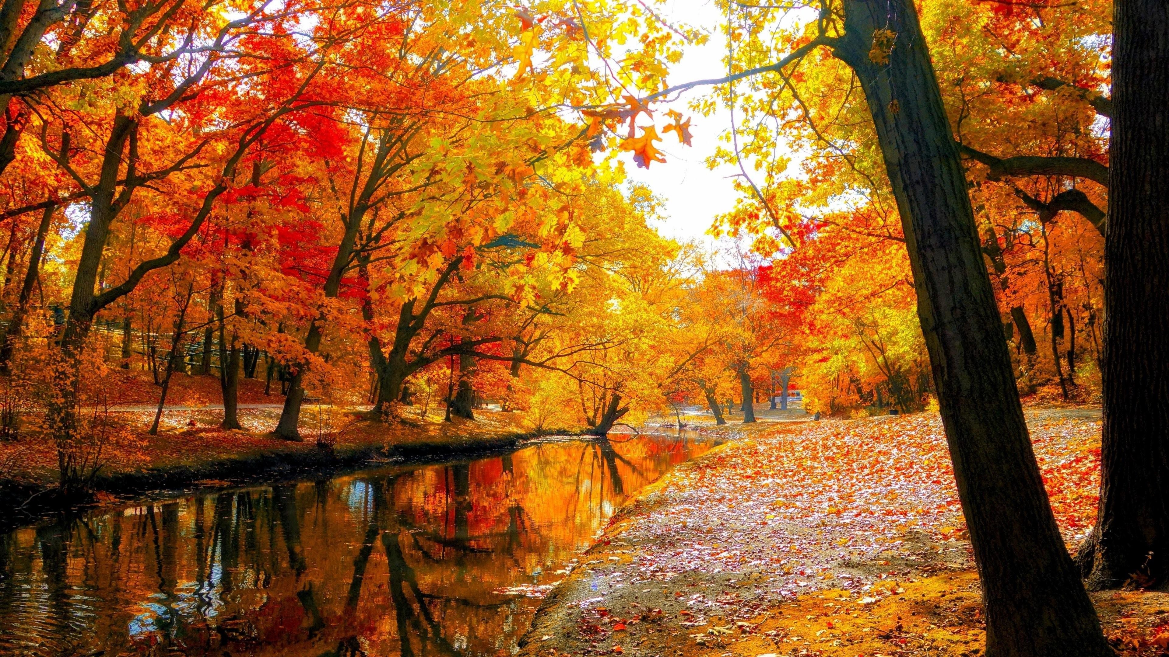 Autumn Trees Wallpaper (85+ images)