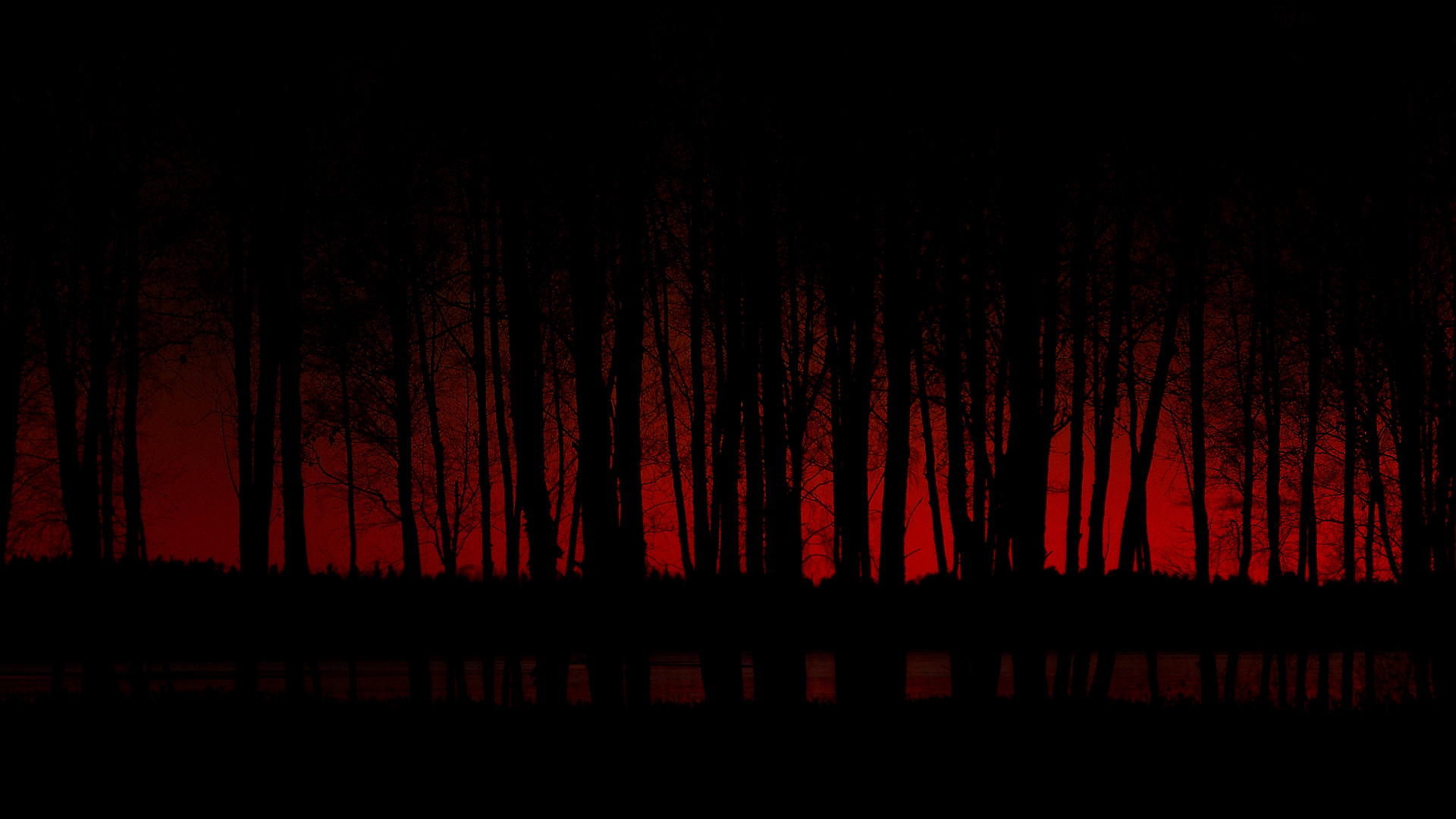 1920x1080 Scary Dark Forest Desktop Wallpaper 64316