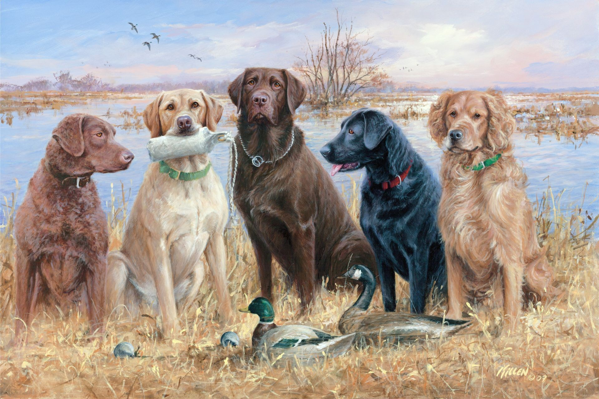1920x1280 duck hunting dogs | Duck Hunting Desktop Wallpapers with Waterfowl Gallery