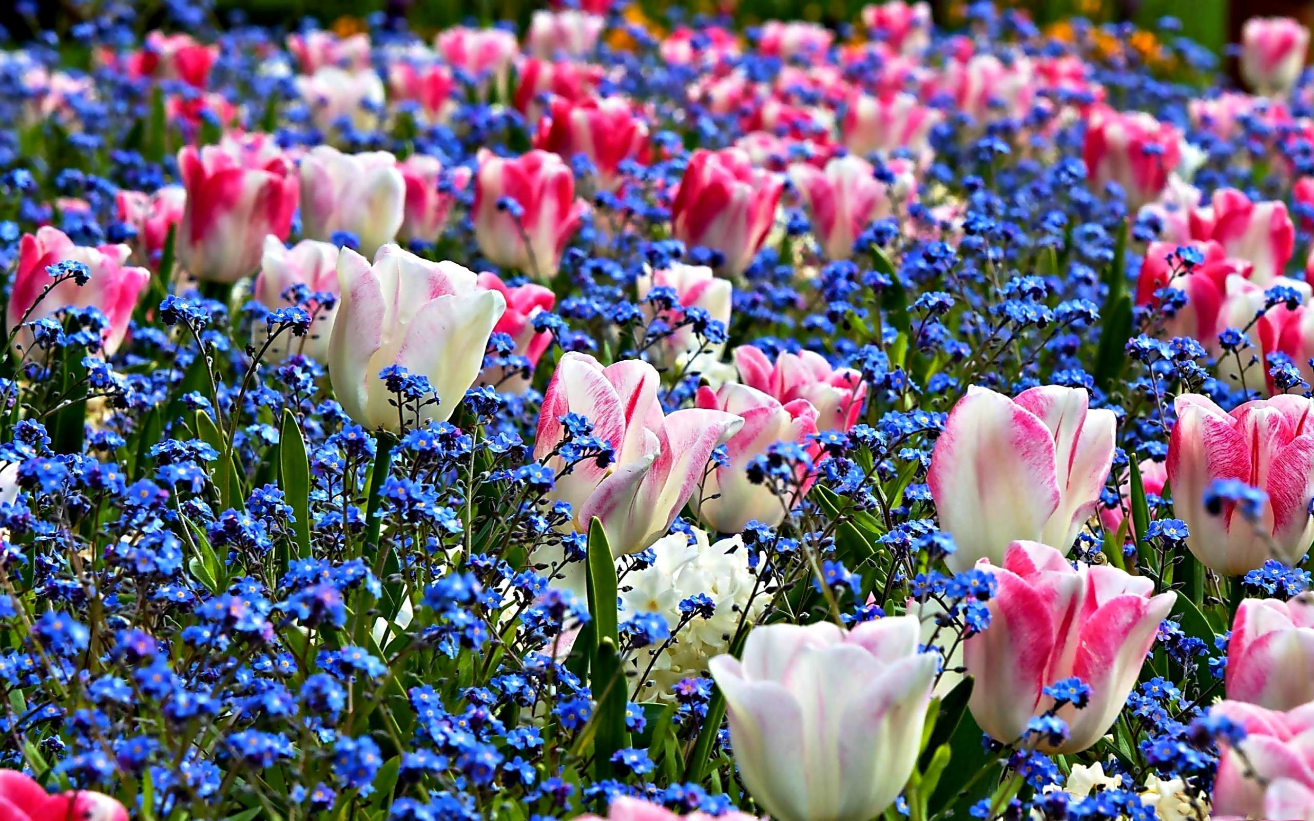 2560x1600 Spring Flowers Images Desktop Wallpaper : TimeDoll