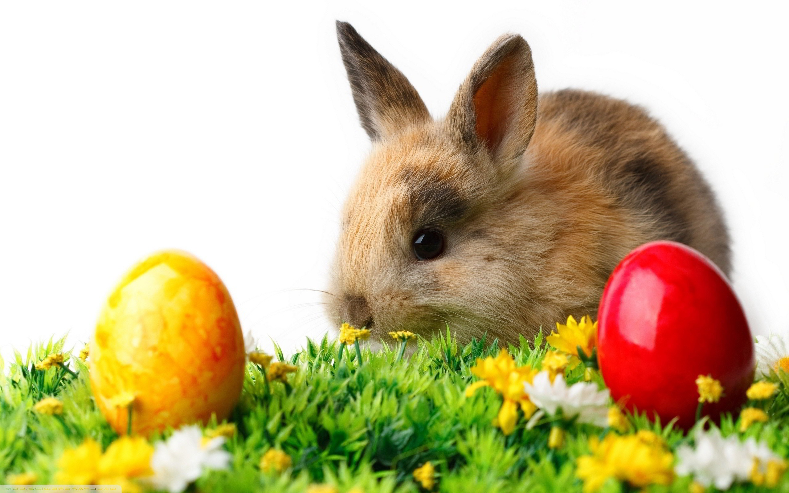 Wallpaper With Bunnies 60 Images