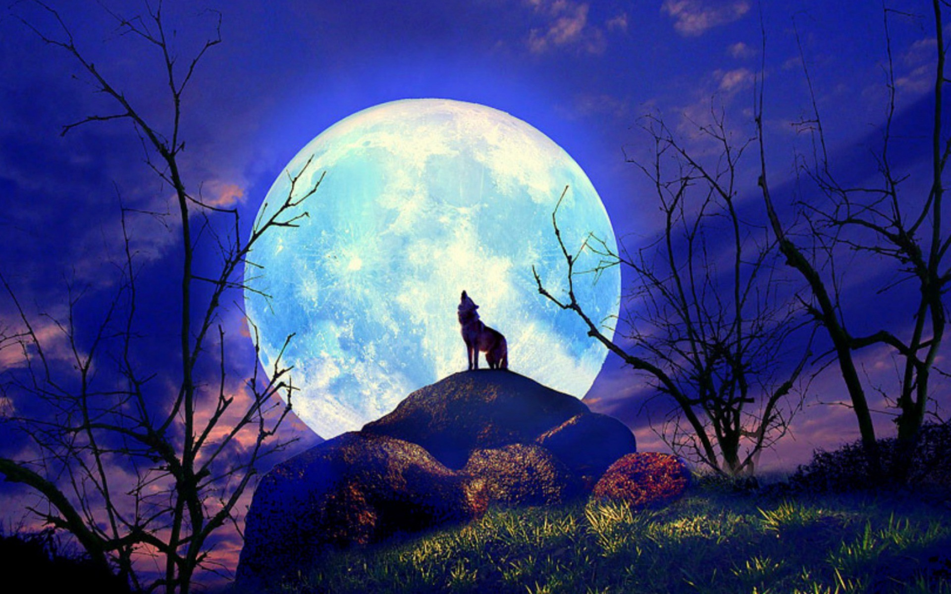 1920x1200 Wolf Nature Full Moon Yelp wallpapers and stock photos