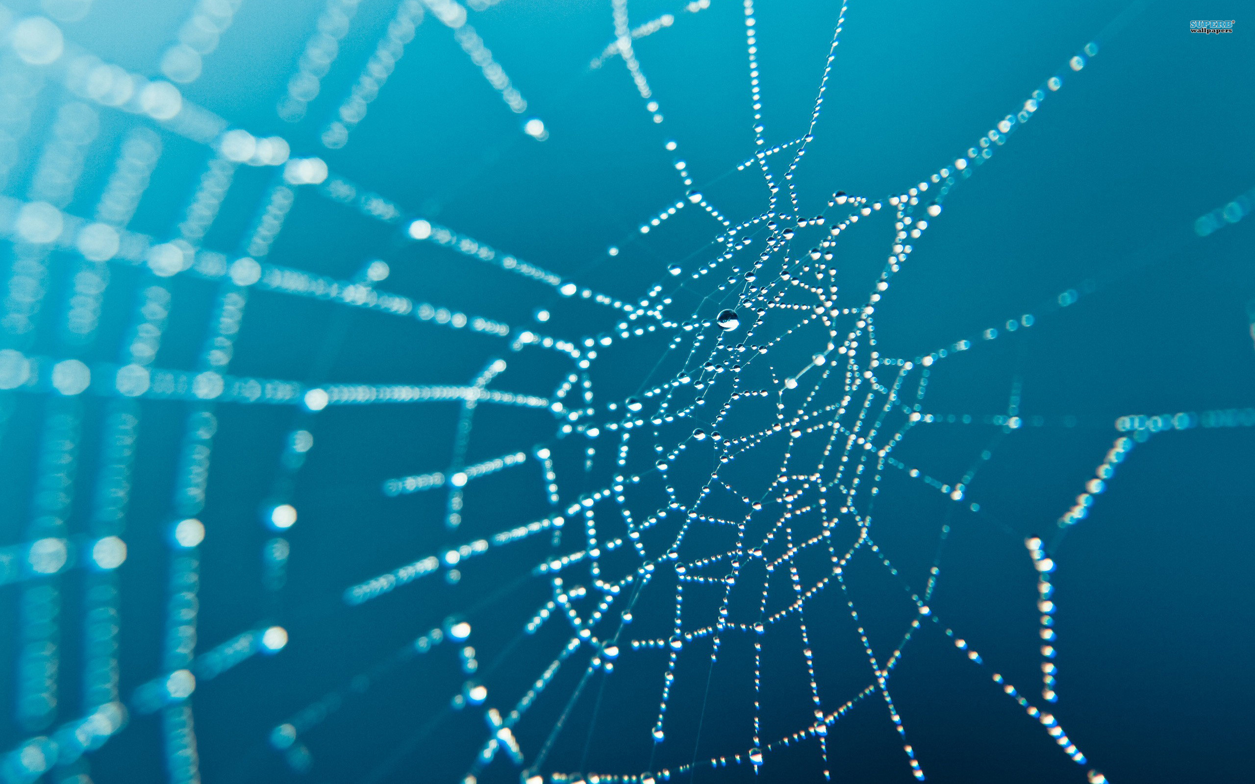 2560x1600 spider-web-wallpaper-2