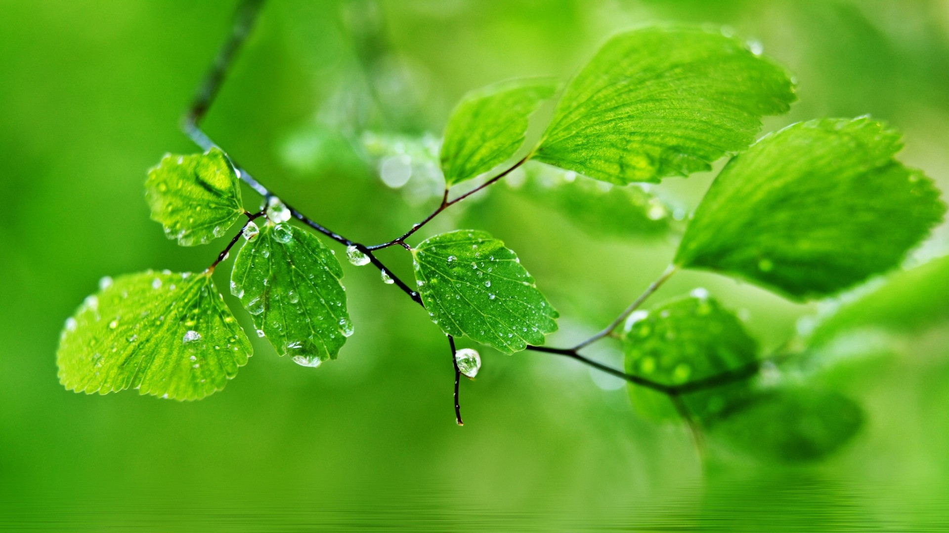Beautiful Rain Drops Wallpapers With Quotes 52 Images