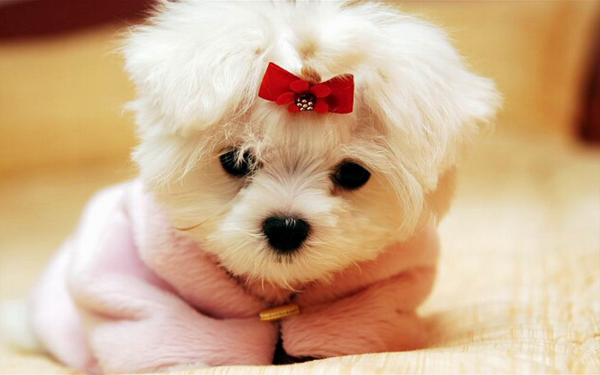 cute dogs wallpapers (61+ images)