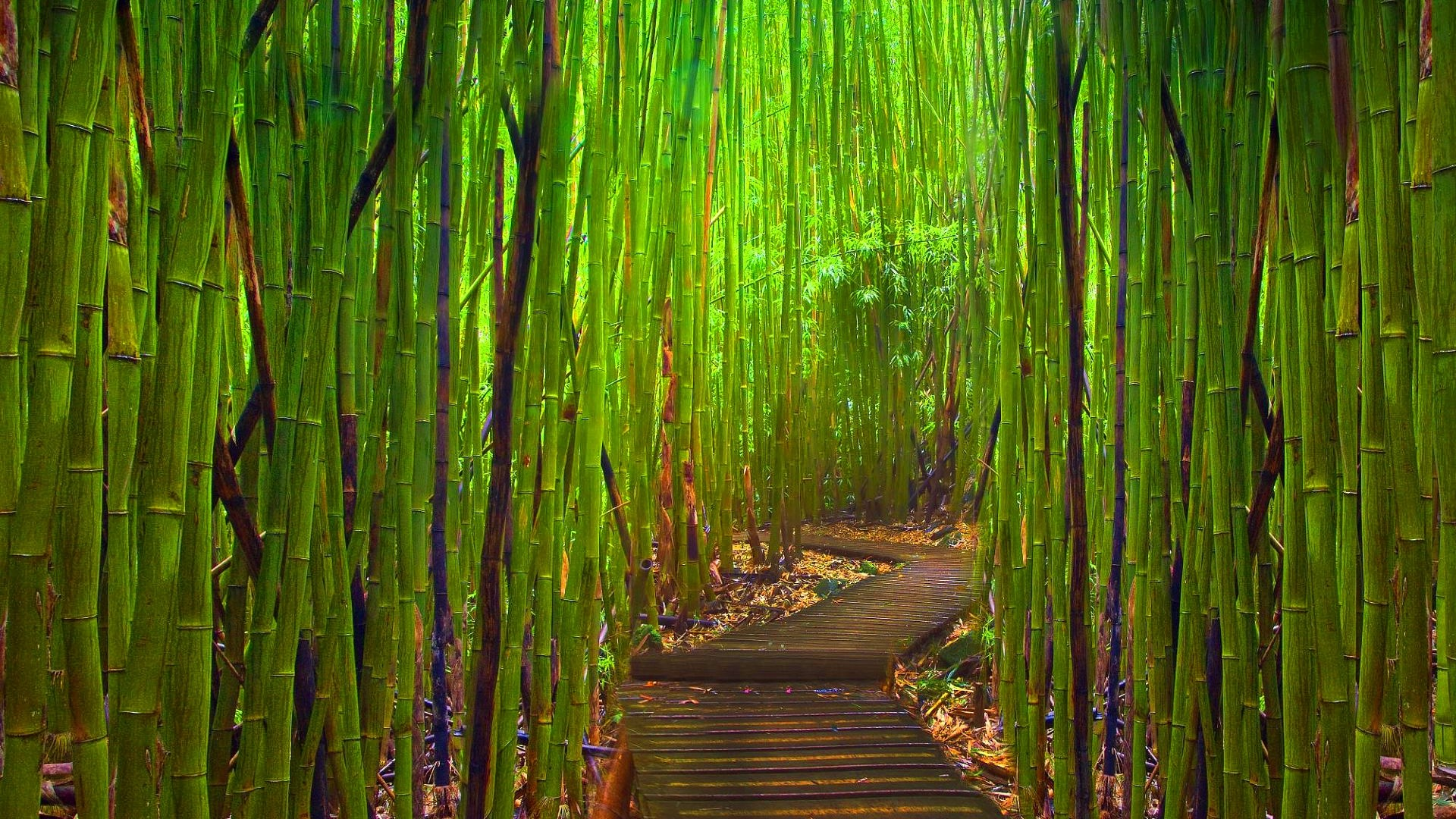 1920x1080 Bamboo Forest Night