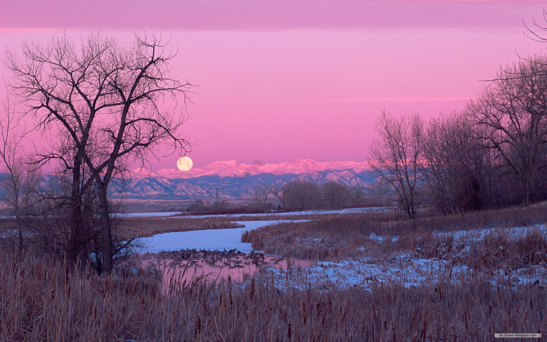 1080x1920 Beautiful Pink Nature IPhone Wallpaper Resolution