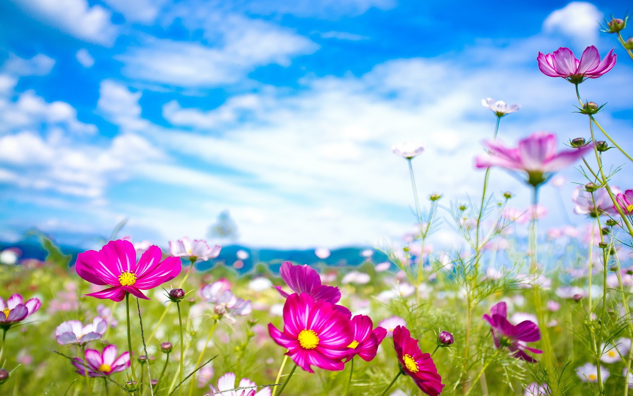 2560x1600 Summer Flowers. [Desktop wallpaper ]