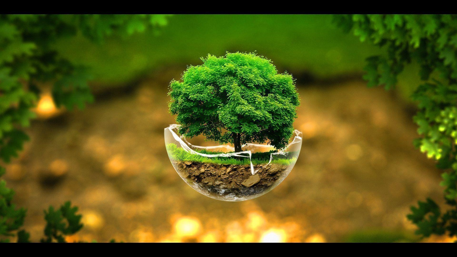 Tree Background Wallpaper 58 Images