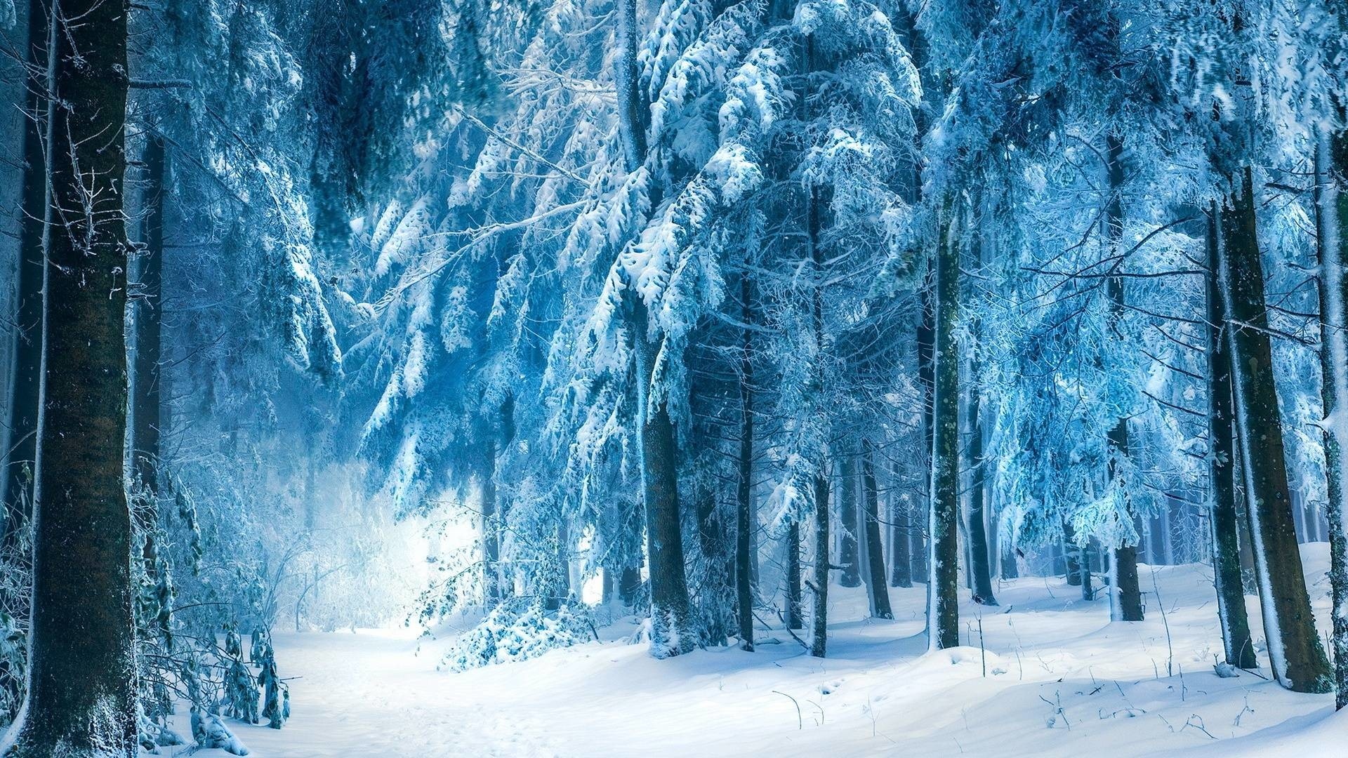 Snow forest wallpaper 61 images - Snowy wallpaper ...