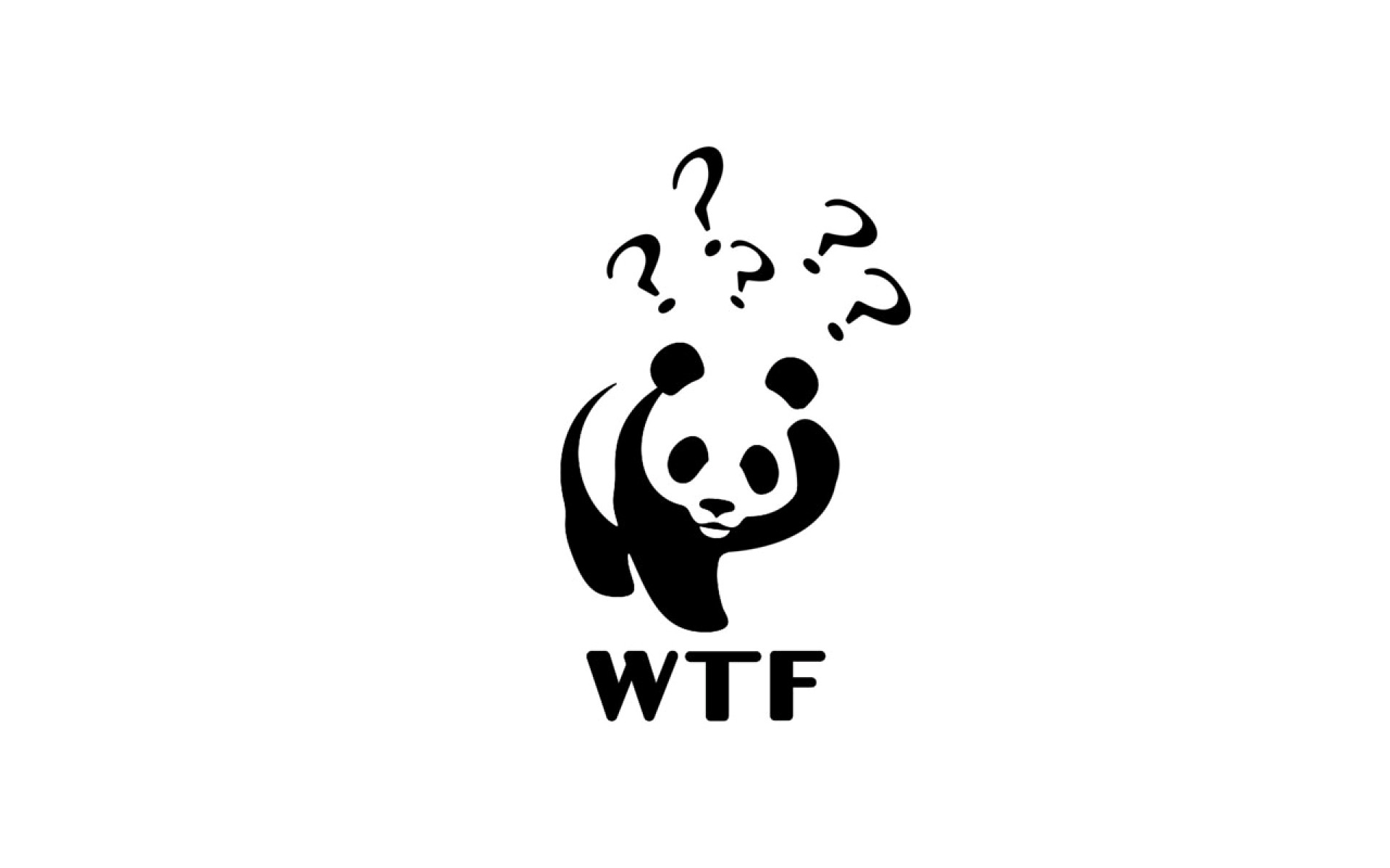 1920x1200 Confused Panda wallpapers and stock photos