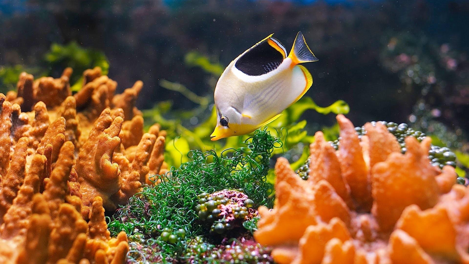 Saltwater Fish Wallpaper (58+ images)