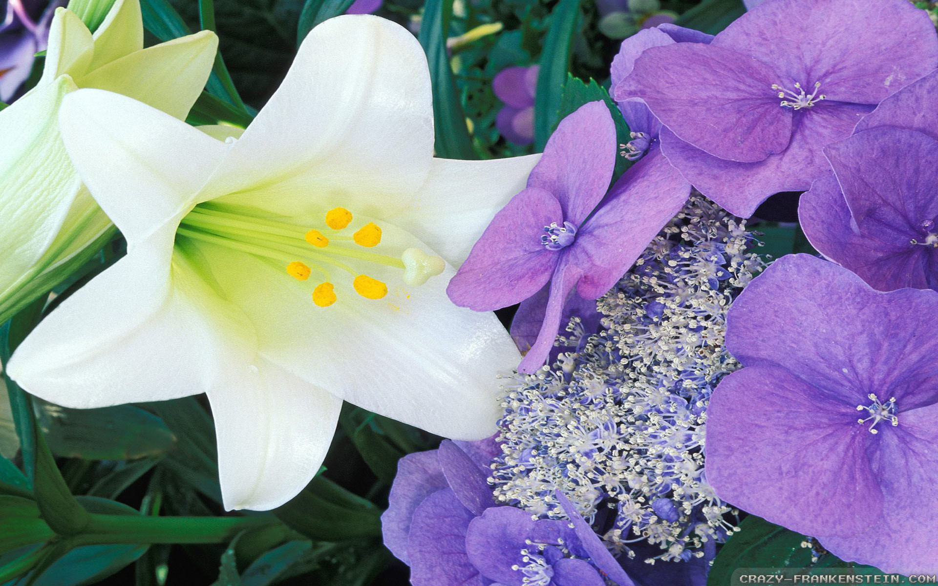1920x1200 Wallpaper: Hydrangea and Easter lily. Resolution: 1024x768 | 1280x1024 |  1600x1200. Widescreen Res: 1440x900 | 1680x1050 |