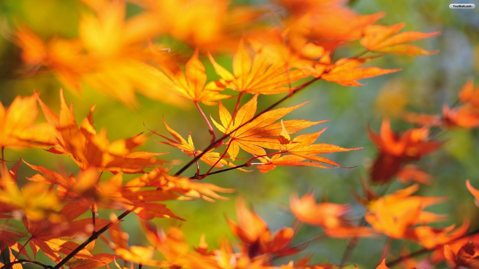 Fall Leaves Wallpapers (72+ images)