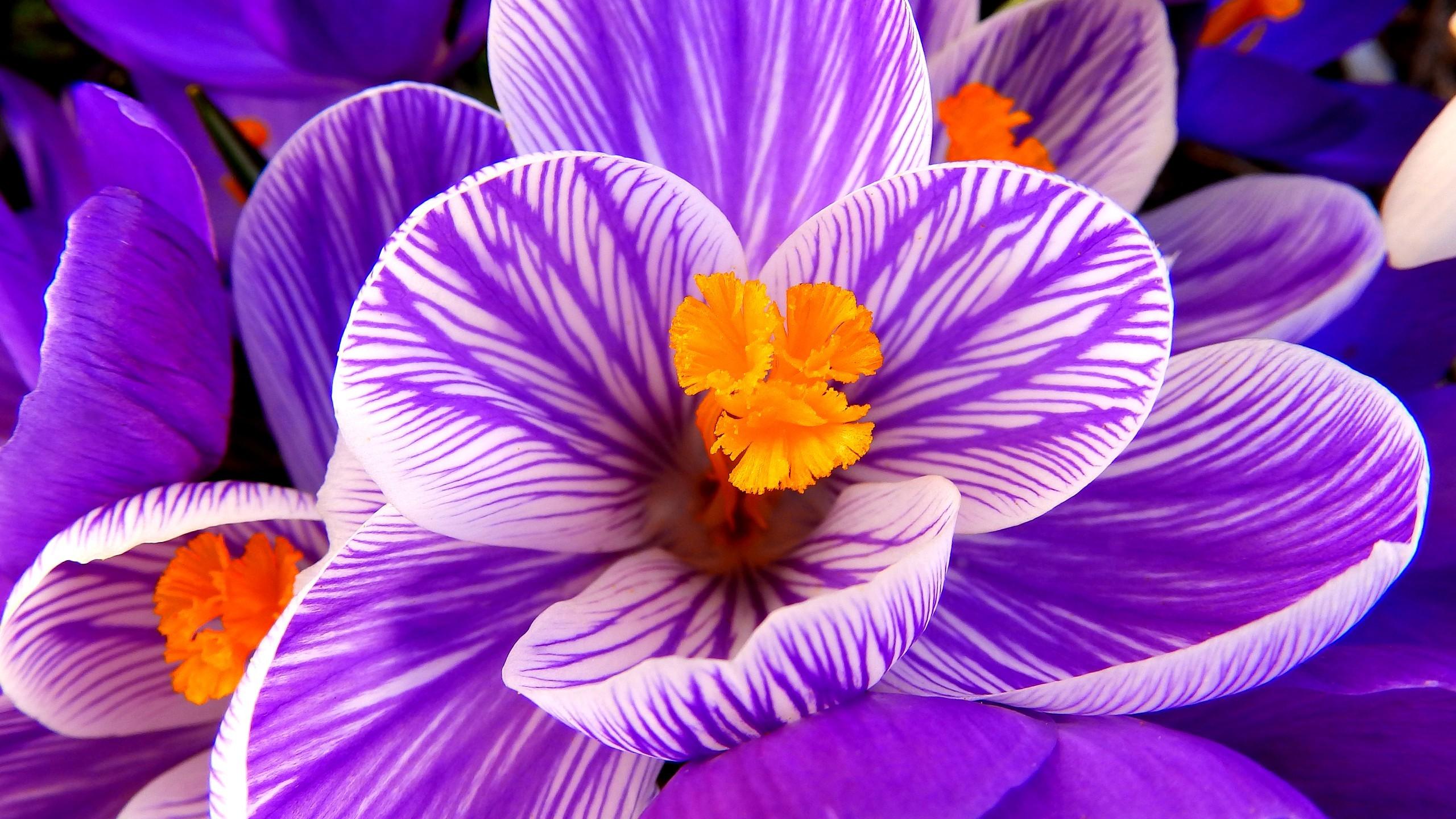 Funny Purple Flowers Hd Wallpaper: Purple Flowers Wallpapers (76+ Images
