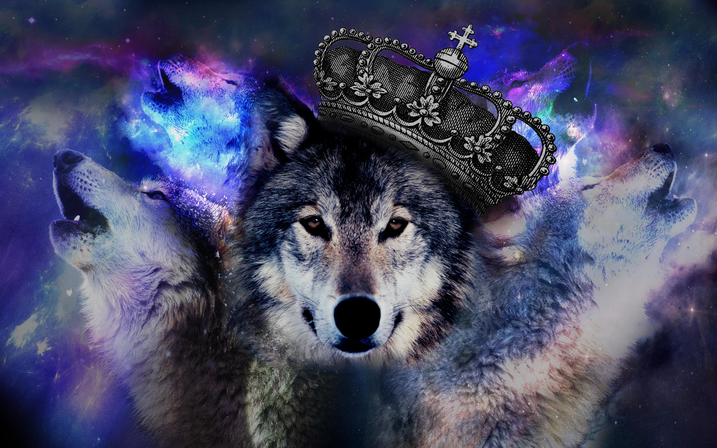 Trippy Wolf Wallpapers (66+ images)