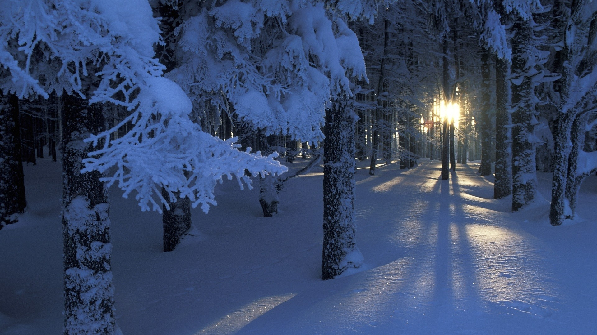 1920x1080 Winter forest - photo wallpapers, pictures in the winter forest / Страница 3