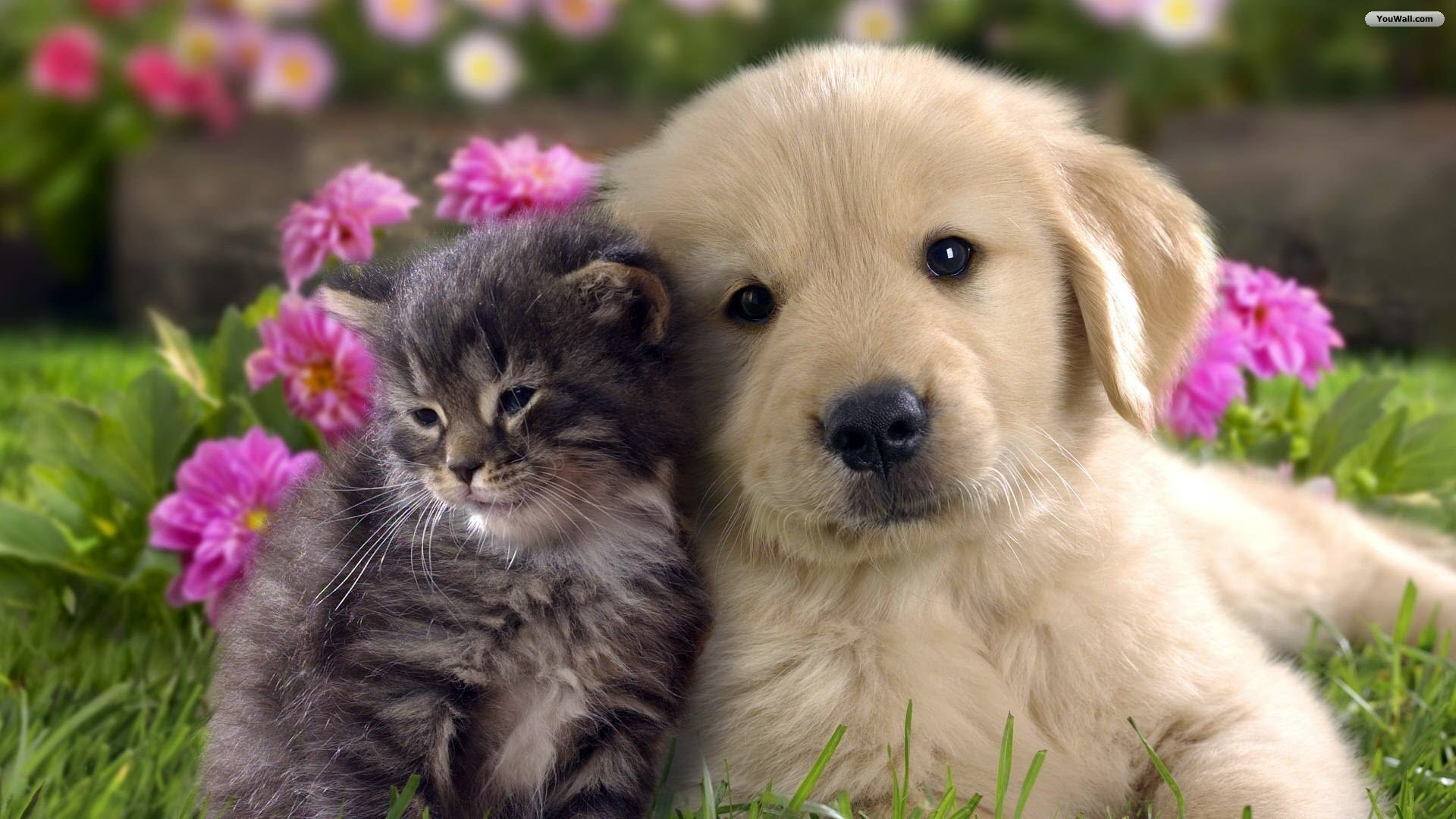 cats dogs wallpaper desktop (51+ images)